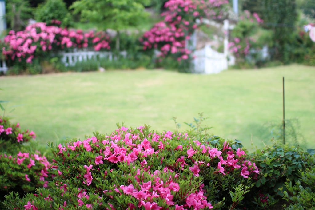 정원의 모습입니다.