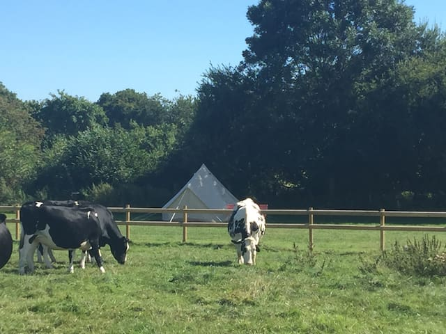 Bell tent sleeps up to 4 in glorious countryside.