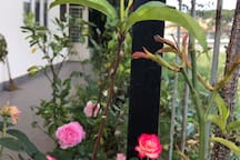 Lối đi bên hông nhà ra vườn hoa hồng phía sau