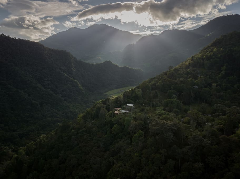 Cabin is surrounded by coffee trees and Cloud Forest.
