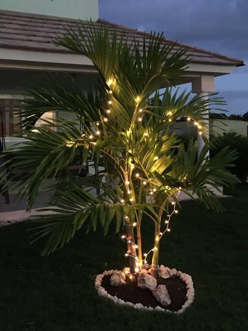 Christmas lights and palm trees!