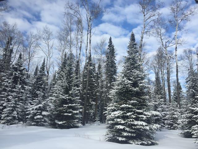 North Woods Retreat - cozy, quiet, near GM