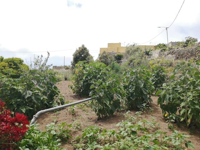 """En la finca que está en el camino de la casa rural """"Green Village"""" tenemos árboles frutales para poder comer estupenda fruta de temporada."""