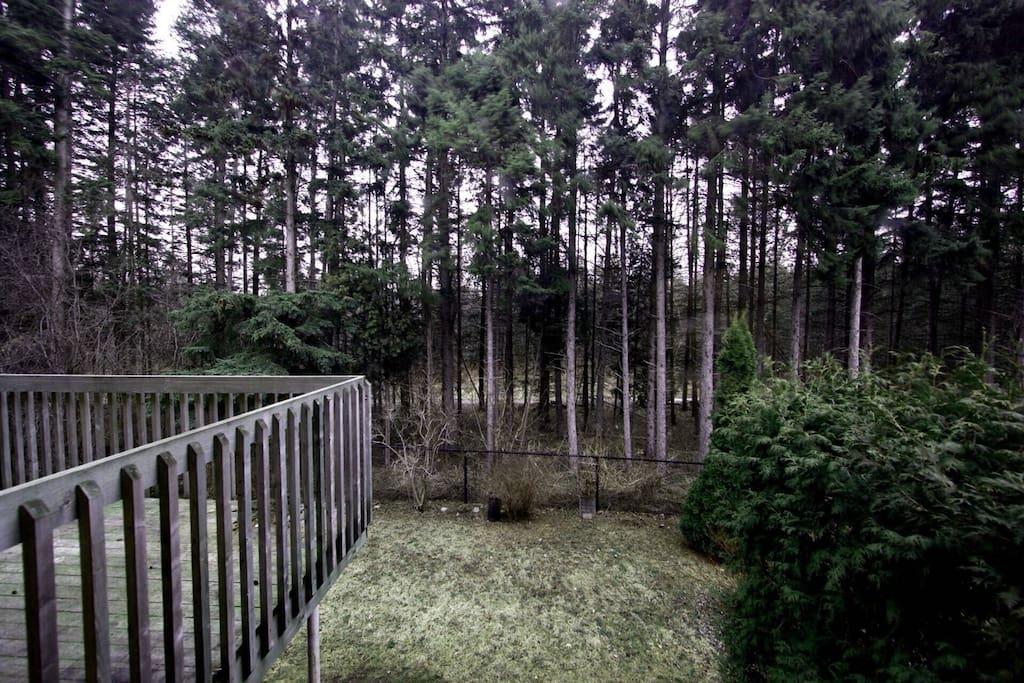 后院森林景观