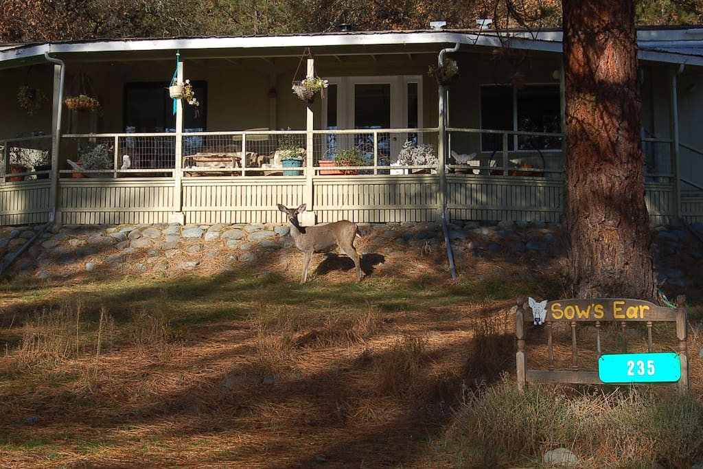 Deer are everywhere which explains why our little community is called Bucktail