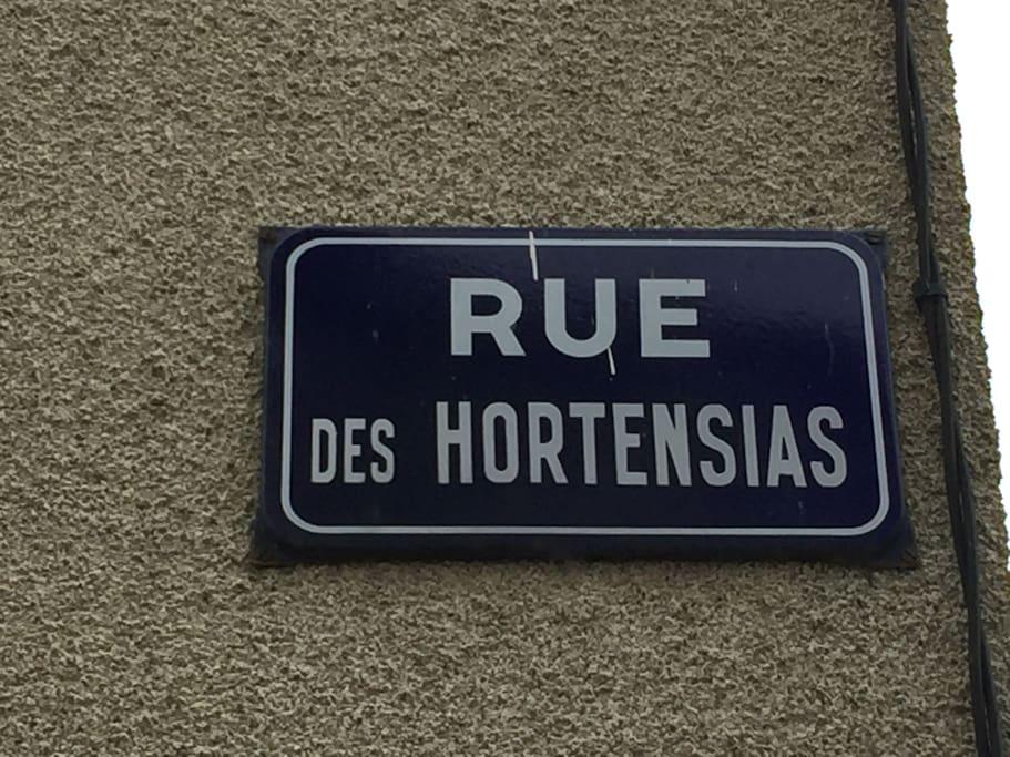 Hydrangea Street