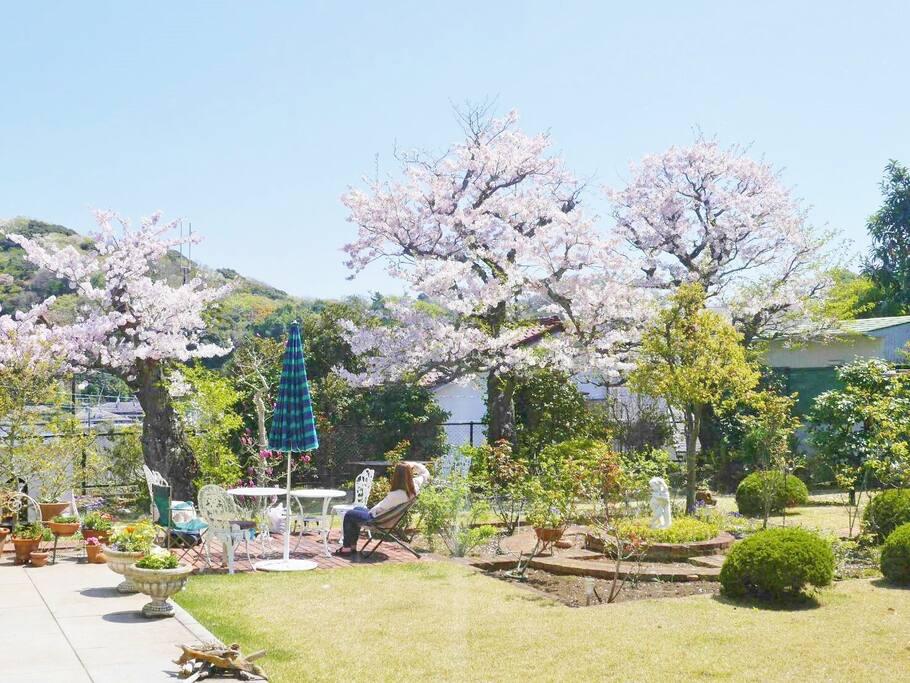ガーデンテラス 桜の頃