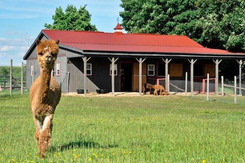 Alpacas & Luxury Glamping for 2 at Brae Ridge Farm