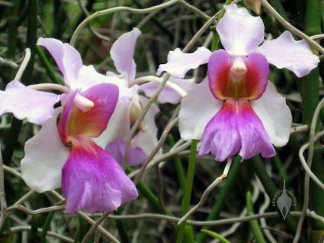 """Studio """"Orchid"""""""