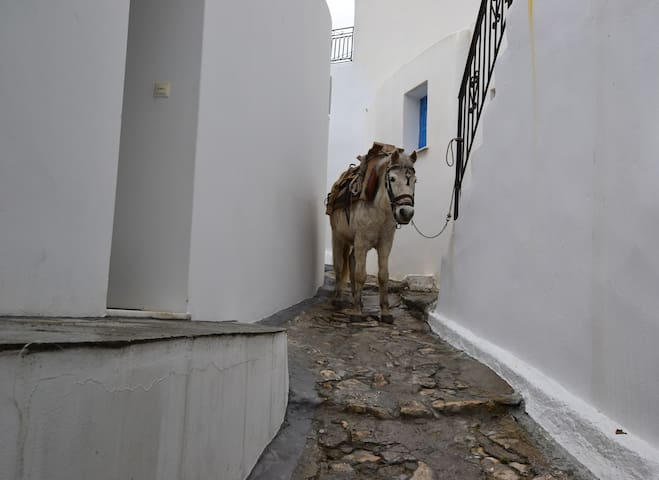 Mitsos' mule (did the heavy lifting for the renovation!)