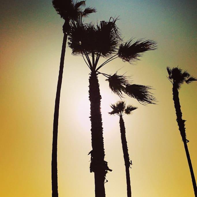 Fotografija – Venice on the Beach Hotel