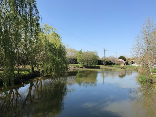 Jardin avec étang