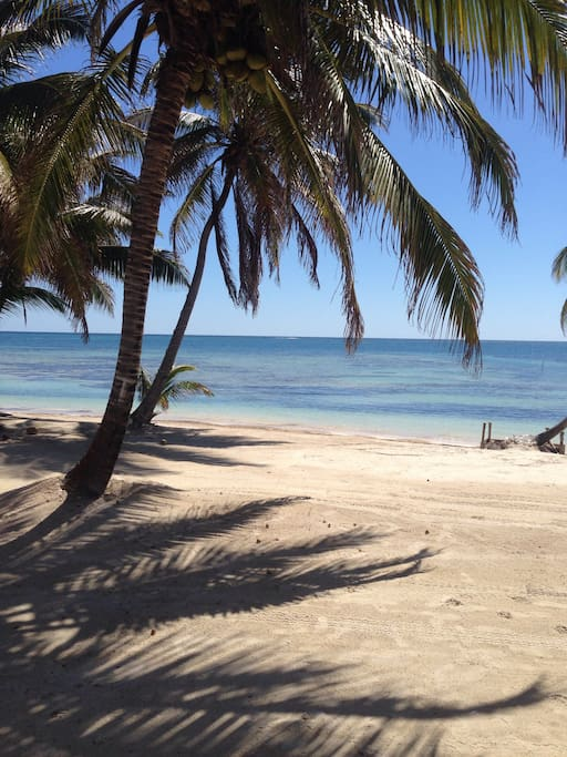 Our beach shaded by coconut palms truly paradise