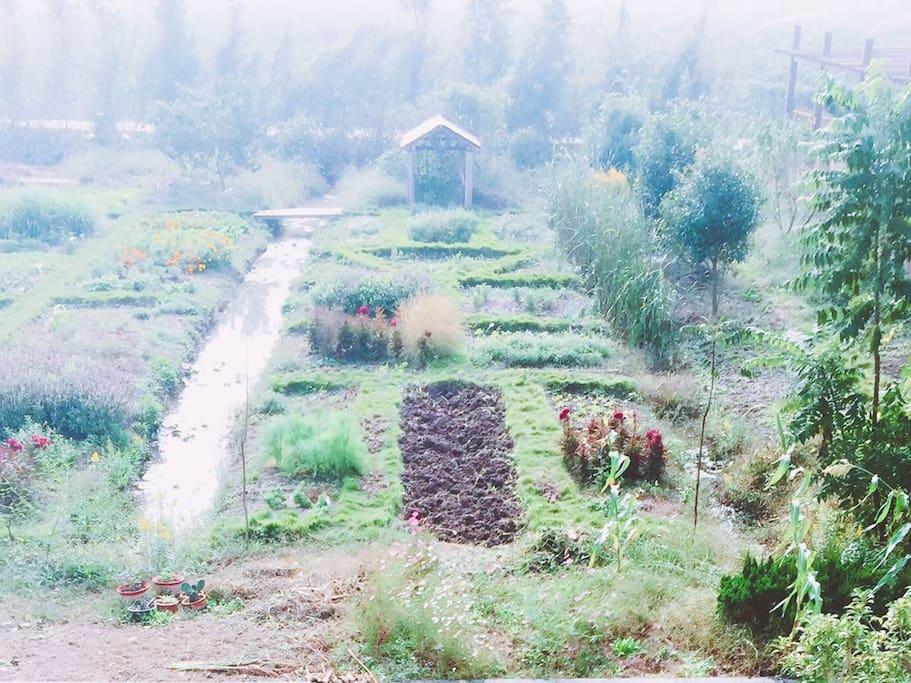 晨雾中的香草园