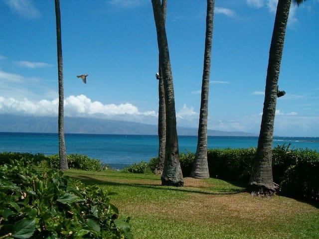 Oceanfront Studio at Napili Shores Resort - A106