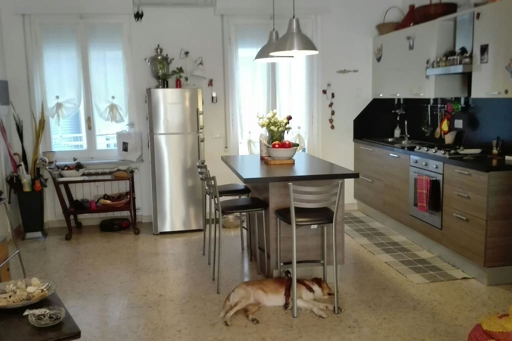The kitchen and one of my dogs, Marlon!