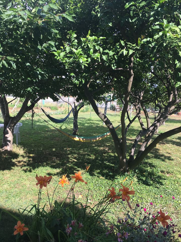 Amache - hammocks