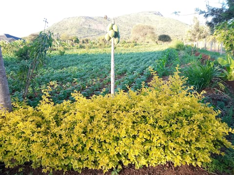 Nyaboke Farm & Guest House