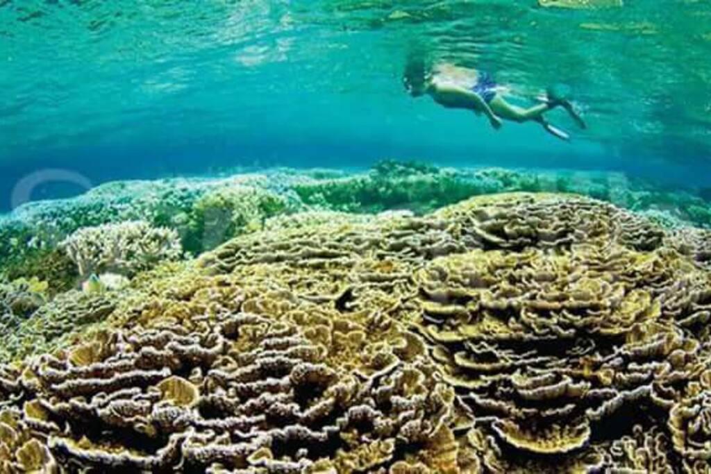 Corals at Hikkaduwa beach
