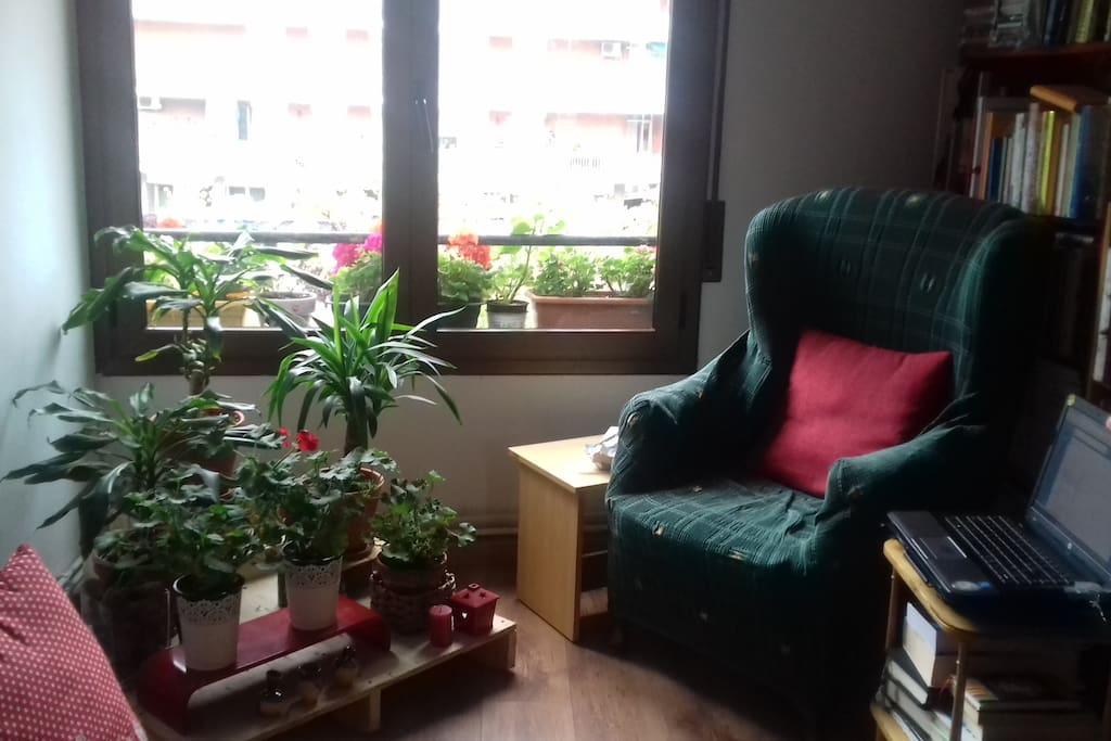 living room/ new plants/ in 2018