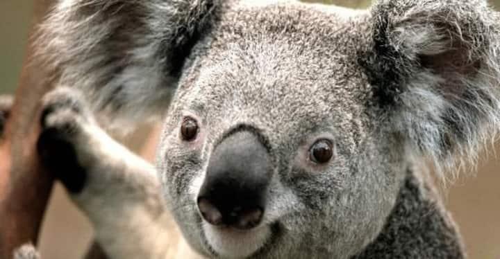 Aloha Burleigh (Koala Park)