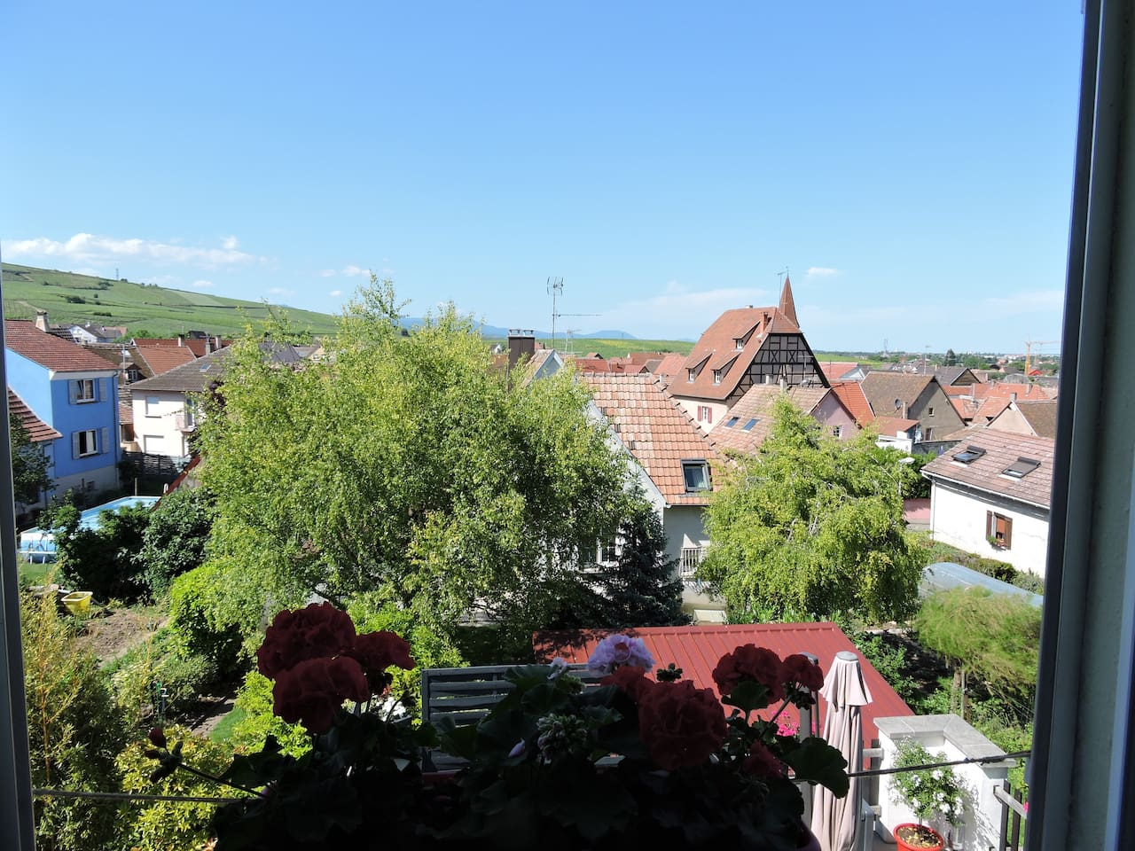 Vue dégagée sur le vignoble et la ville de Colmar. Au loin vous pouvez apercevoir le château du Hokœnigsbourg.