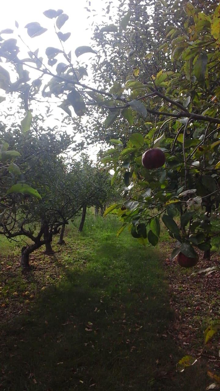 Orchard Retreat at Malabar Peach & Apple Orchard