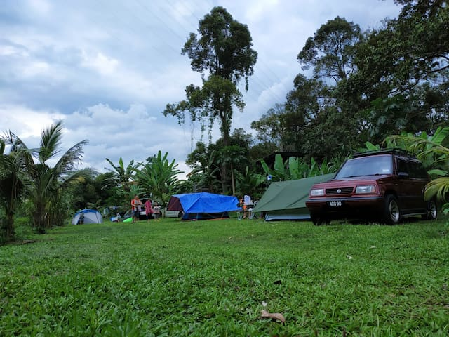 Camp site in organic durian orchard