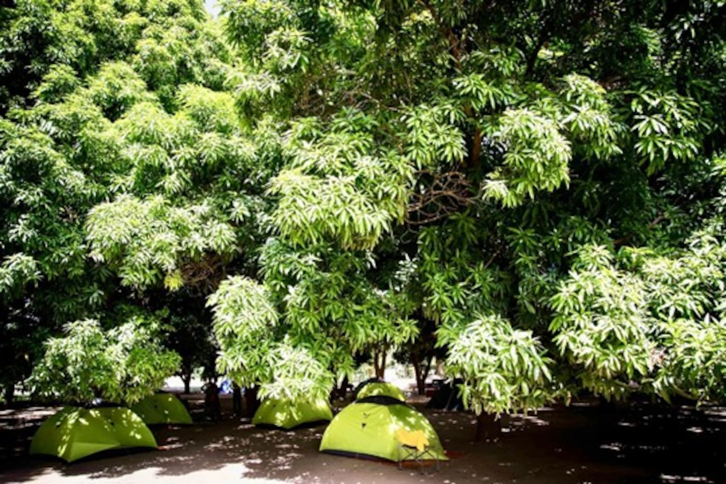 Our campsite with many lush mango trees!