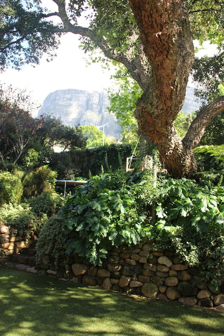 Views from the verandah and garden on to Table Mountain (and the trampoline)