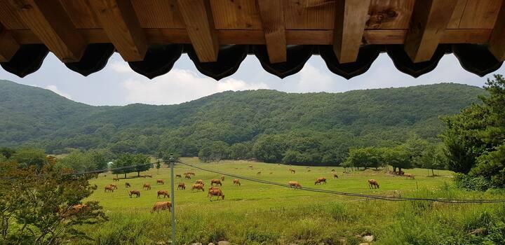 신우목장개인부터 100명 단체까지 숙박ㆍ워크샵Sinwooranch near Gyeongju