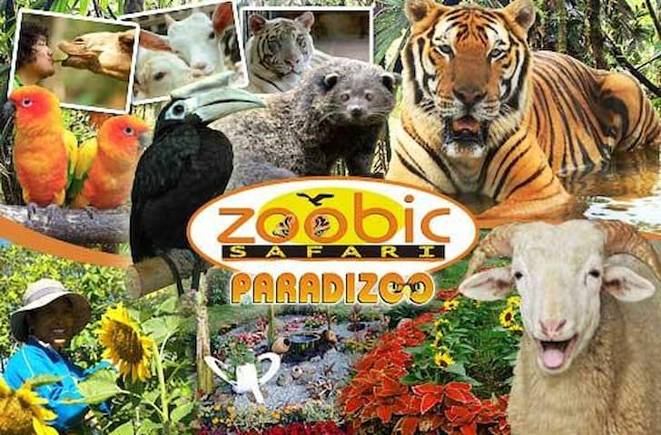 Zoobic Zafari - 12km away