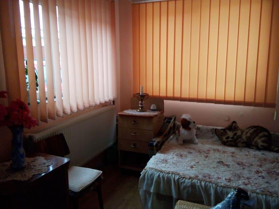 room p5