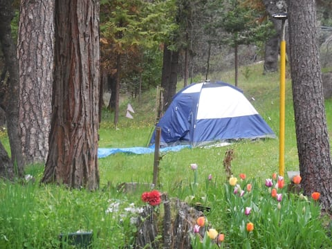 Cande's   TENT-SITE for 2 by the Woods