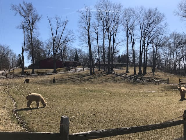 Alpaca and hobby farm retreat minutes from Kent!