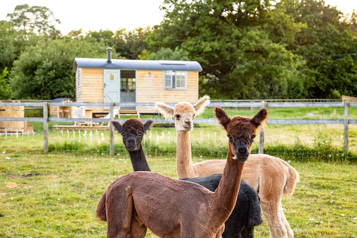 Luxury shepherds hut in a field of your own