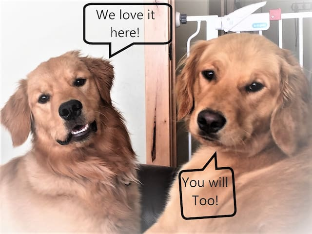 Our goofy goldens