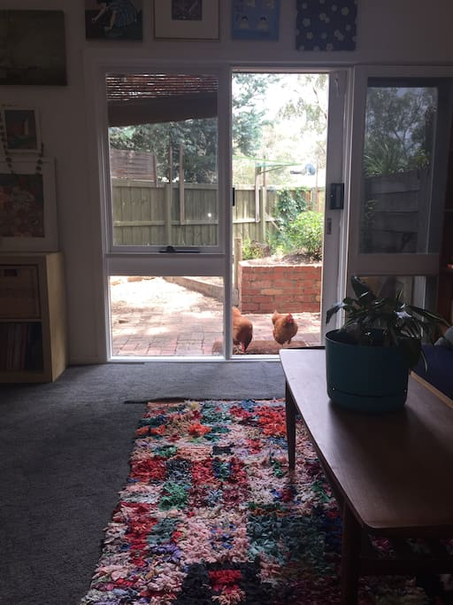 Looking out from guest room (chickens will say hello, but they won't come in, even if door is open)