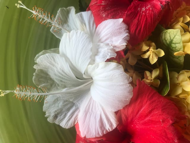 Flowers from the housegirl
