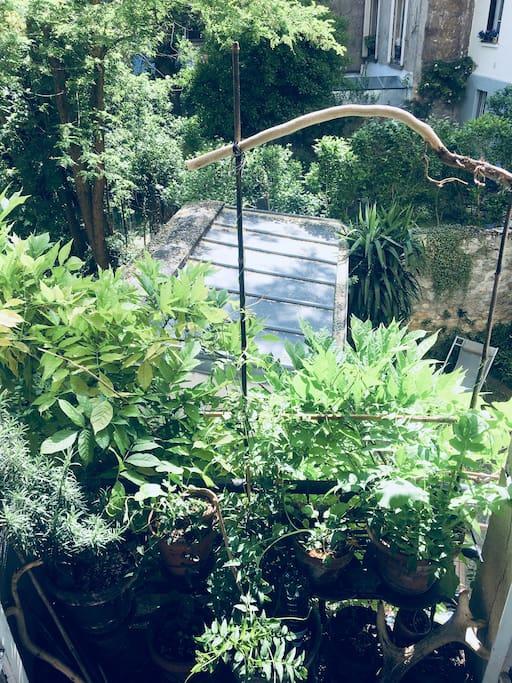 View over the neighborhood gardens