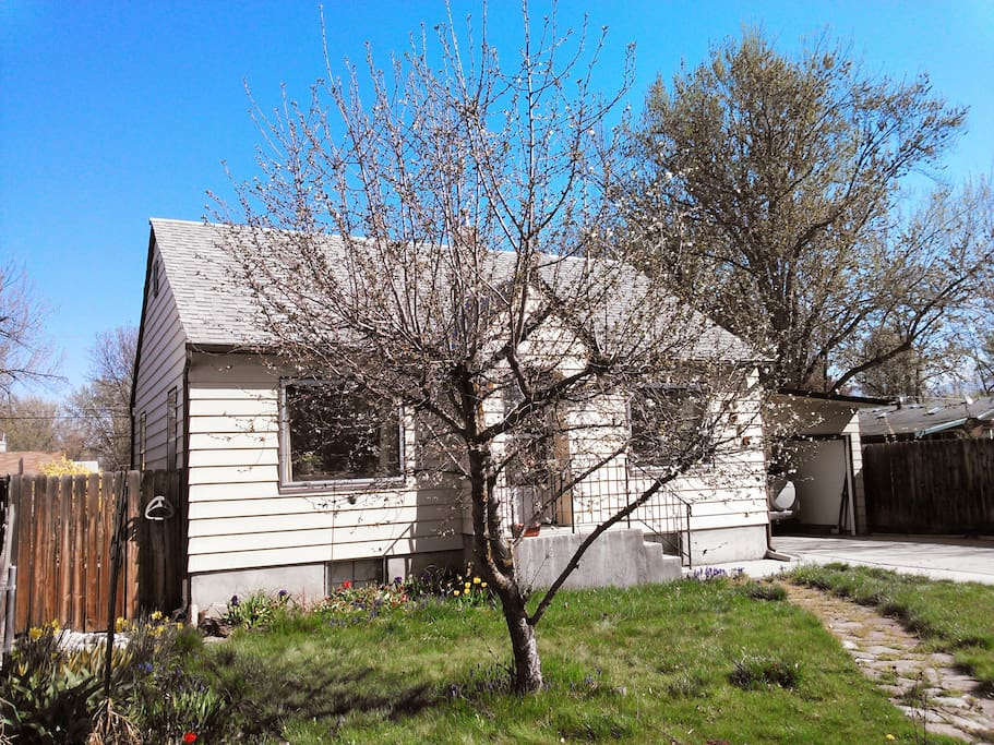 The house and early spring for the pie cherry tree.