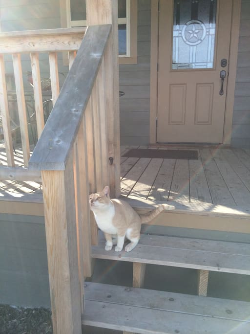 Teddy who loves to spend time on this porch.