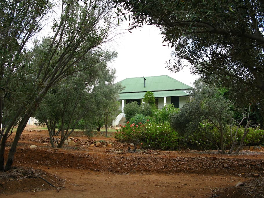 main house from the olive grove