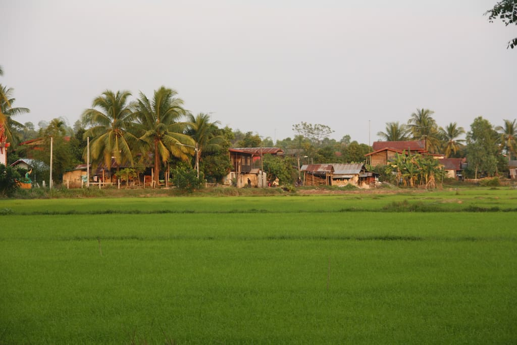 The view of the rice fields