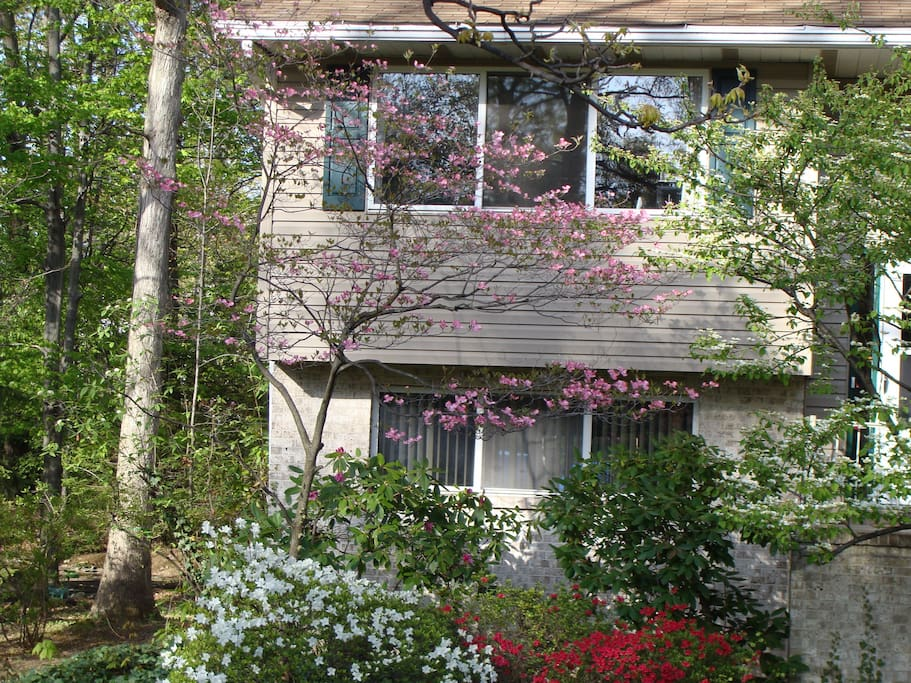 This is how our house looks like now - spring is beautiful in Pennsylvania!