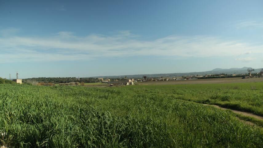 Campos de cultivo alrededor