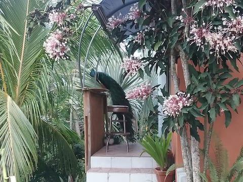 Peacock Inn Paradise