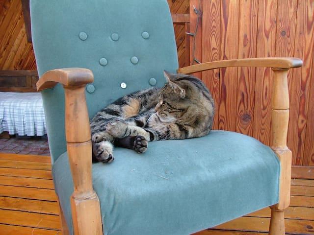 Baileys the cat :)