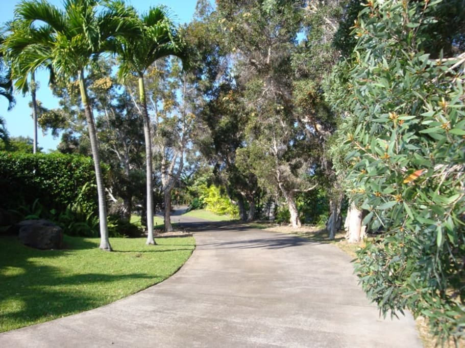 Driveway up to house