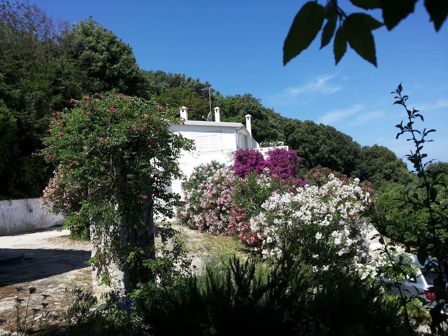 La villa è nel Parco del Gargano, immersa in un agrumeto a 900 dal mare